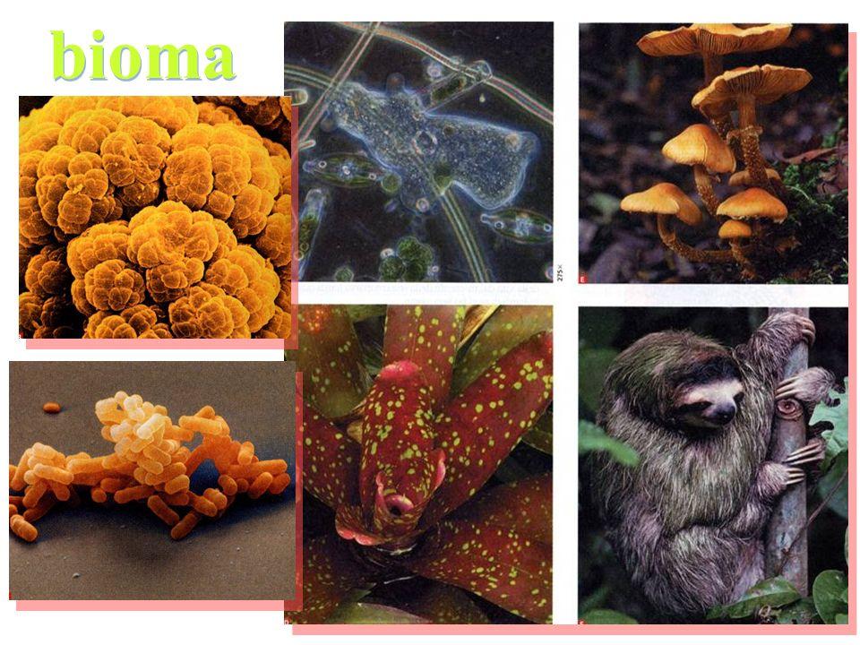 Ecosistema - BIOMA: DOMINI Albero filogenetico della vita Ecosistema - BIOMA: DOMINI Albero filogenetico della vita TFA – DIDATTICA DELLE SCIENZE UNICATT