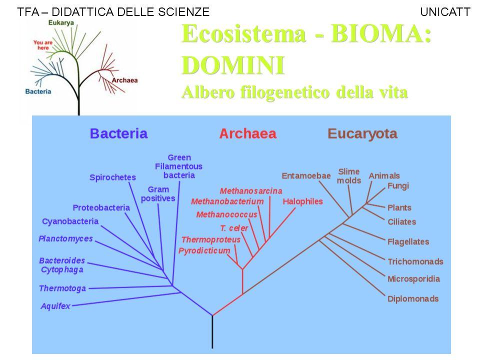 Ecosistema - BIOMA: DOMINI Albero filogenetico della vita Ecosistema - BIOMA: DOMINI Albero filogenetico della vita TFA – DIDATTICA DELLE SCIENZE UNIC