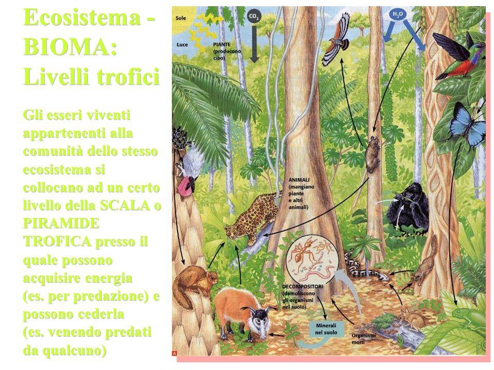 Ecosistema - BIOMA: Livelli trofici Gli esseri viventi appartenenti alla comunità dello stesso ecosistema si collocano ad un certo livello della SCALA