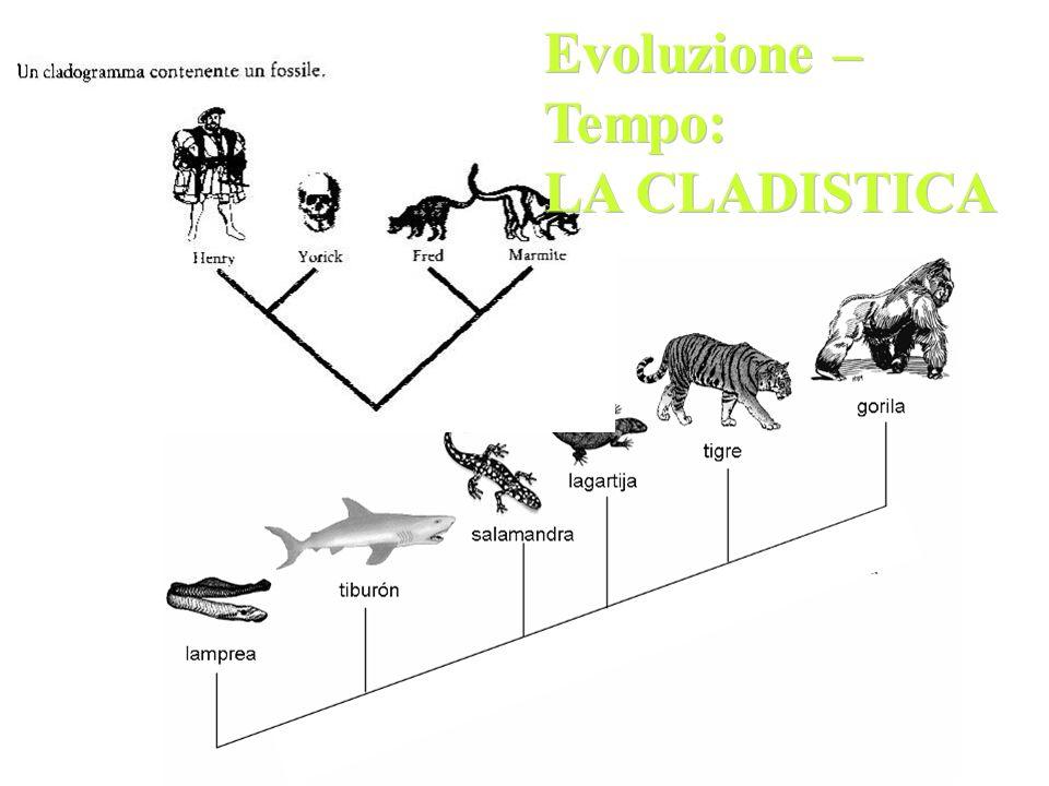Evoluzione – Tempo: LA CLADISTICA Evoluzione – Tempo: LA CLADISTICA