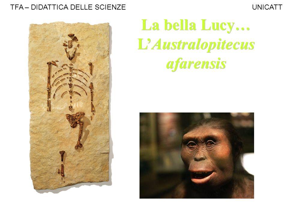 La bella Lucy… LAustralopitecus afarensis La bella Lucy… LAustralopitecus afarensis TFA – DIDATTICA DELLE SCIENZE UNICATT