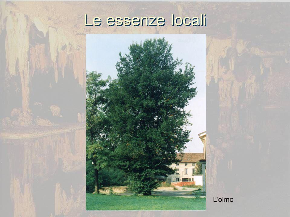 Le essenze locali Lolmo