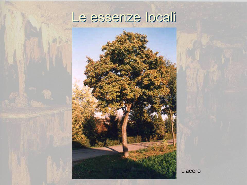 Le essenze locali Lacero