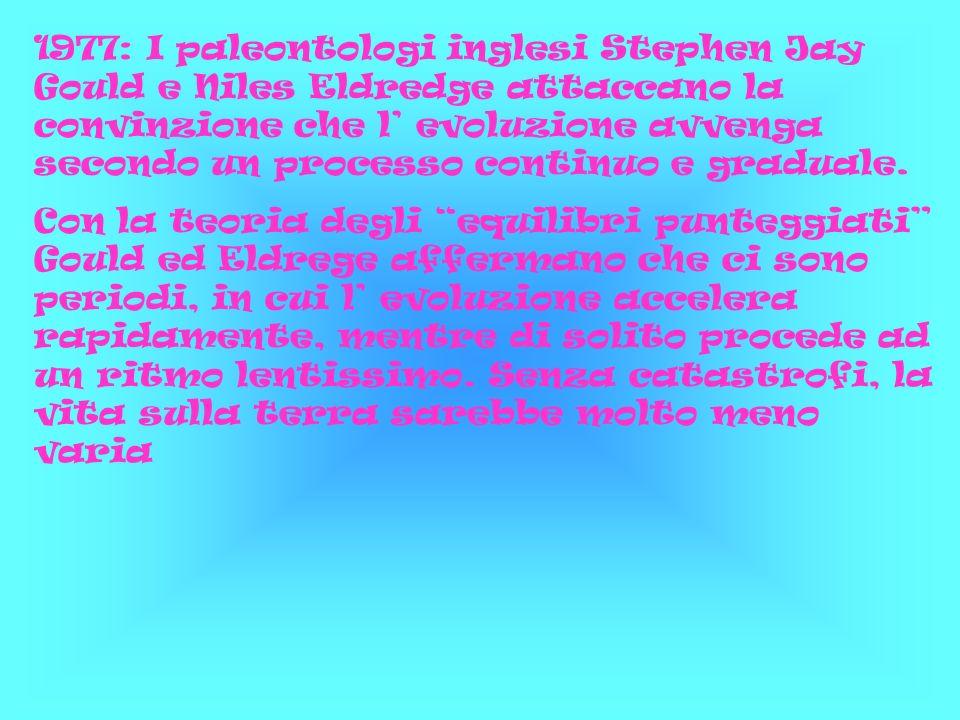 1977: I paleontologi inglesi Stephen Jay Gould e Niles Eldredge attaccano la convinzione che l evoluzione avvenga secondo un processo continuo e gradu