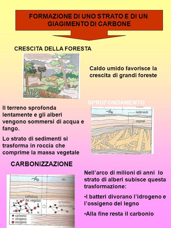 FORMAZIONE DI UNO STRATO E DI UN GIAGIMENTO DI CARBONE Caldo umido favorisce la crescita di grandi foreste CRESCITA DELLA FORESTA SPROFONDAMENTO Il te