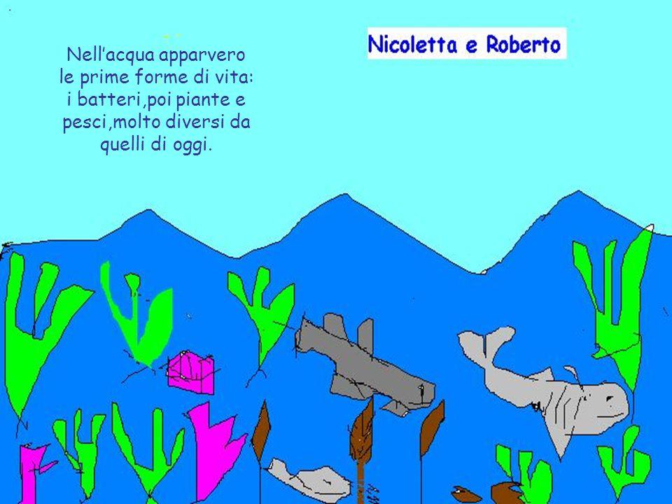Nellacqua apparvero le prime forme di vita: i batteri,poi piante e pesci,molto diversi da quelli di oggi.