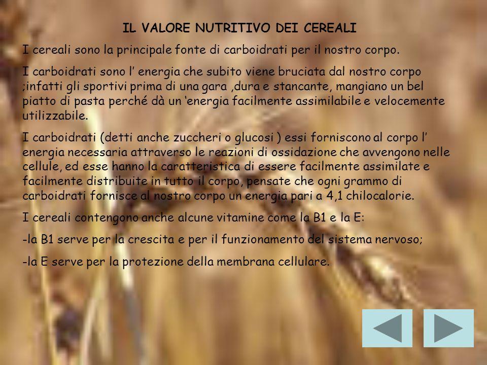 LE FARINE La parola farina deriva dal latino far,termine che indicava il farro, una graminacea simile al frumento, coltivata in epoca pre-romana e romana e utilizzata come uno degli alimenti base.