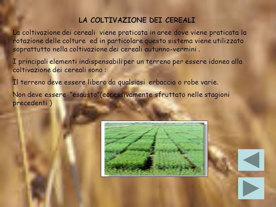 LA PASTA La pasta è un prodotto confezionato con semola di grano duro, impastata con circa il 25 % di acqua più altri eventuali ingredienti per le paste speciali.