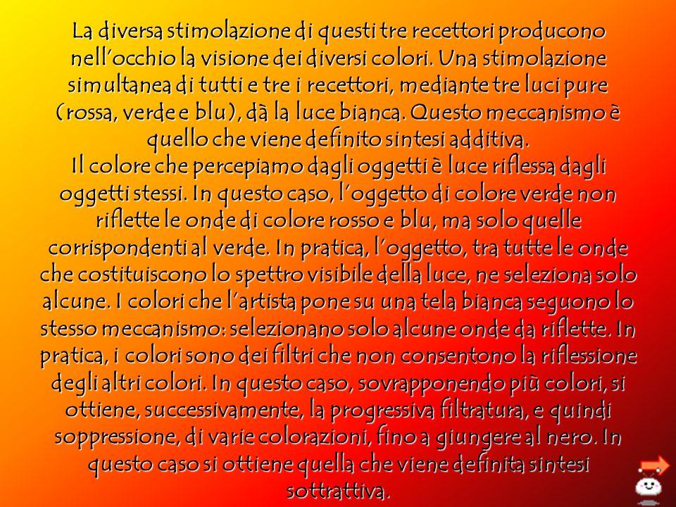La diversa stimolazione di questi tre recettori producono nellocchio la visione dei diversi colori. Una stimolazione simultanea di tutti e tre i recet