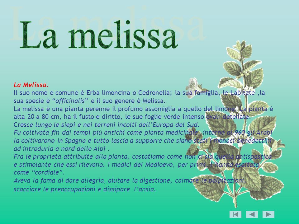 La Melissa. Il suo nome e comune è Erba limoncina o Cedronella; la sua famiglia, le Labitate,la sua specie è officinalis e il suo genere è Melissa. La
