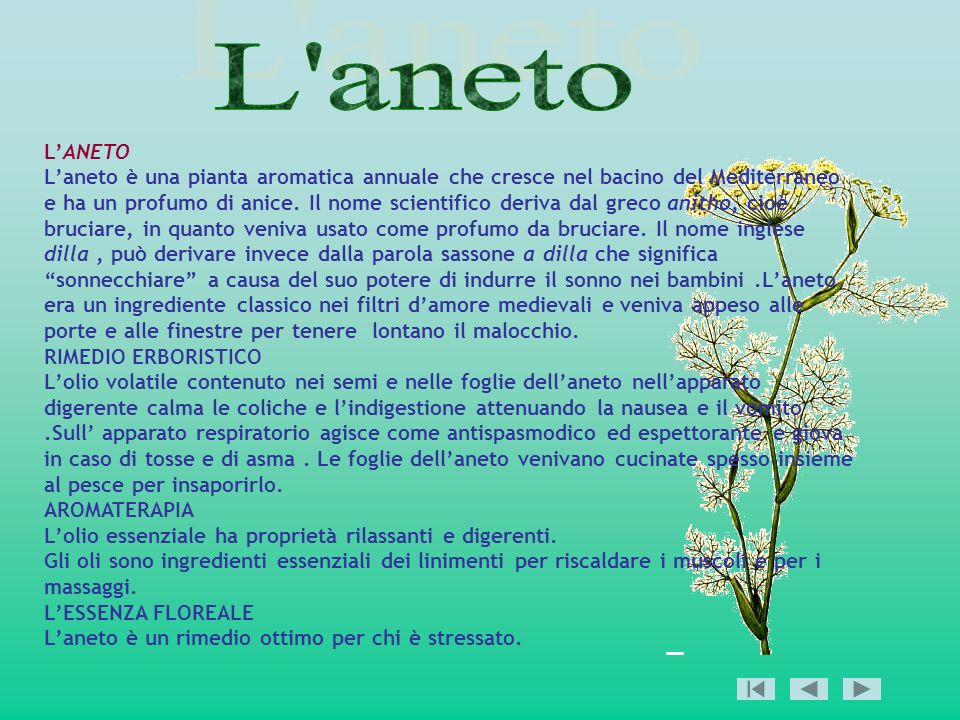 LANETO Laneto è una pianta aromatica annuale che cresce nel bacino del Mediterraneo e ha un profumo di anice. Il nome scientifico deriva dal greco ani