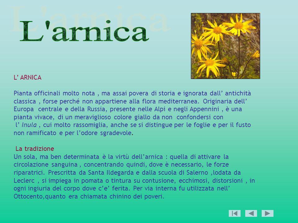 L ARNICA Pianta officinali molto nota, ma assai povera di storia e ignorata dall antichità classica, forse perché non appartiene alla flora mediterran