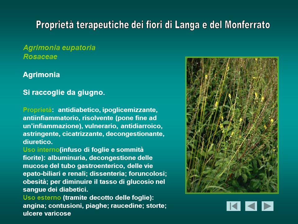 Agrimonia eupatoria Rosaceae Agrimonia Si raccoglie da giugno. Proprietà: antidiabetico, ipoglicemizzante, antiinfiammatorio, risolvente (pone fine ad