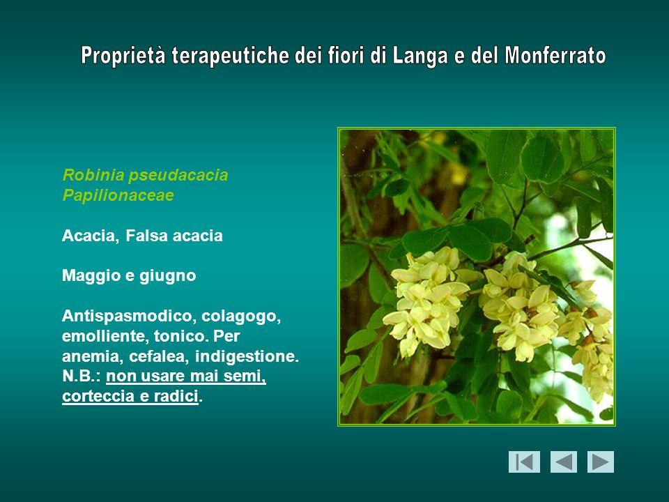 Robinia pseudacacia Papilionaceae Acacia, Falsa acacia Maggio e giugno Antispasmodico, colagogo, emolliente, tonico. Per anemia, cefalea, indigestione