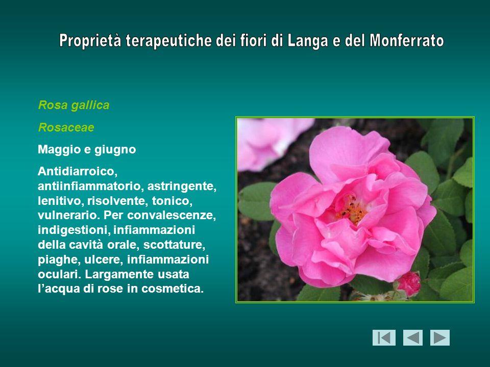 Rosa gallica Rosaceae Maggio e giugno Antidiarroico, antiinfiammatorio, astringente, lenitivo, risolvente, tonico, vulnerario. Per convalescenze, indi