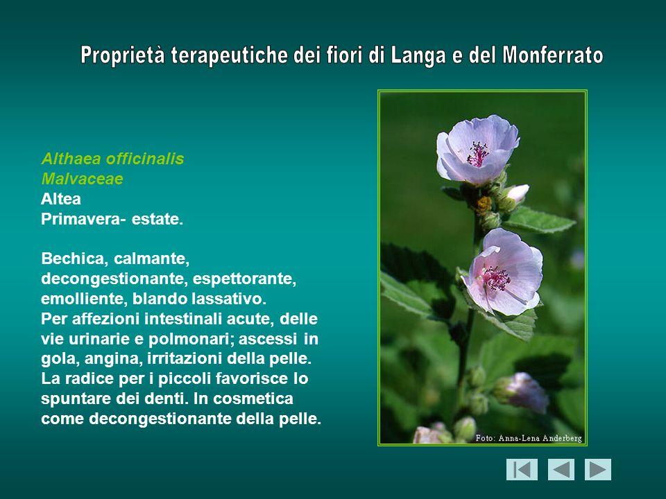 Althaea officinalis Malvaceae Altea Primavera- estate. Bechica, calmante, decongestionante, espettorante, emolliente, blando lassativo. Per affezioni