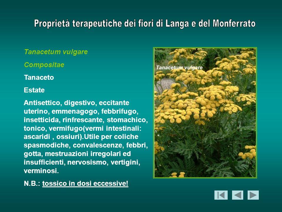 Tanacetum vulgare Compositae Tanaceto Estate Antisettico, digestivo, eccitante uterino, emmenagogo, febbrifugo, insetticida, rinfrescante, stomachico,