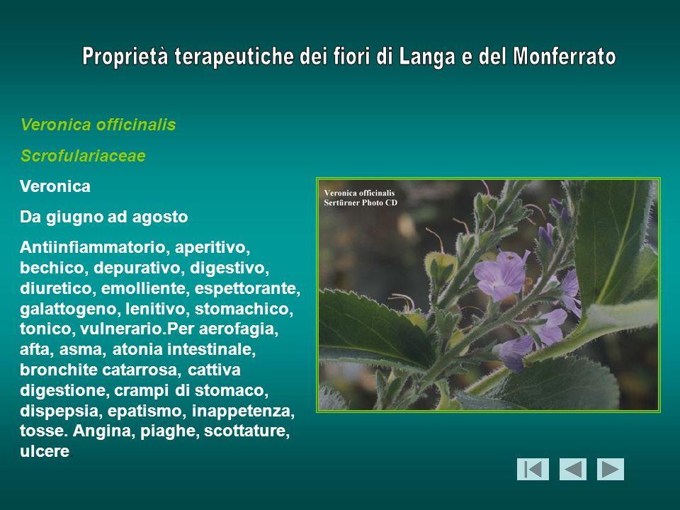 Veronica officinalis Scrofulariaceae Veronica Da giugno ad agosto Antiinfiammatorio, aperitivo, bechico, depurativo, digestivo, diuretico, emolliente,