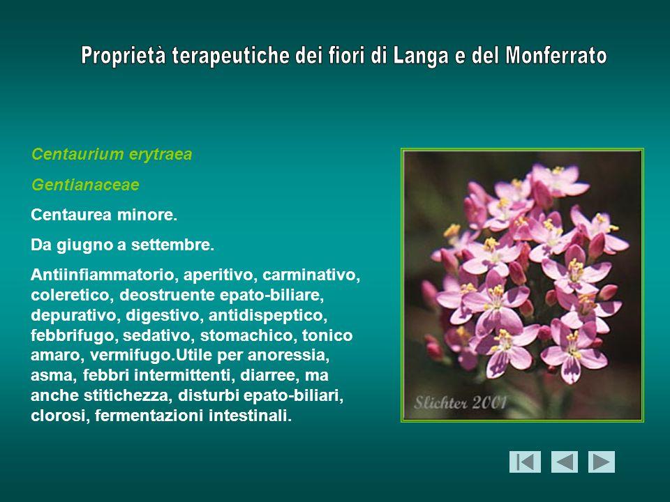 Centaurium erytraea Gentianaceae Centaurea minore. Da giugno a settembre. Antiinfiammatorio, aperitivo, carminativo, coleretico, deostruente epato-bil