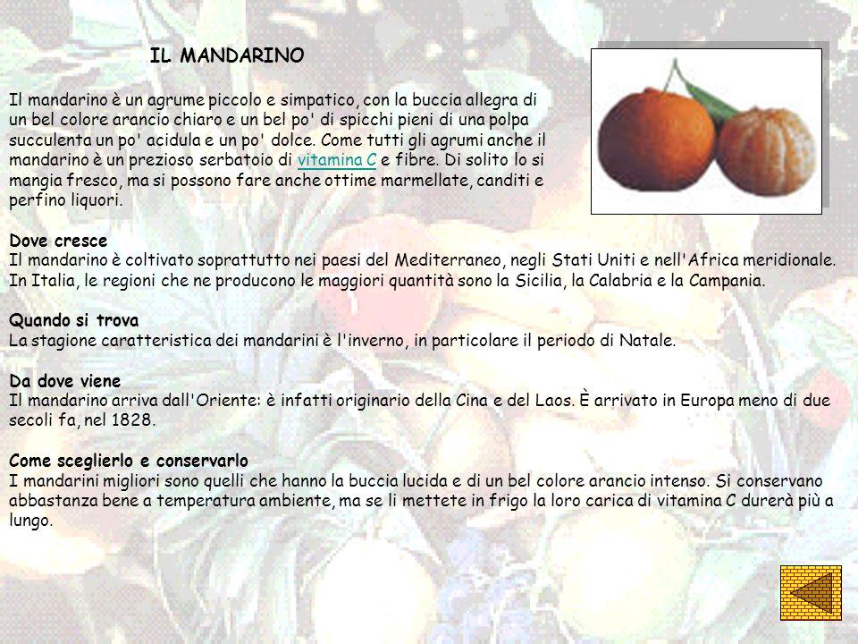 IL MANDARINO Il mandarino è un agrume piccolo e simpatico, con la buccia allegra di un bel colore arancio chiaro e un bel po' di spicchi pieni di una