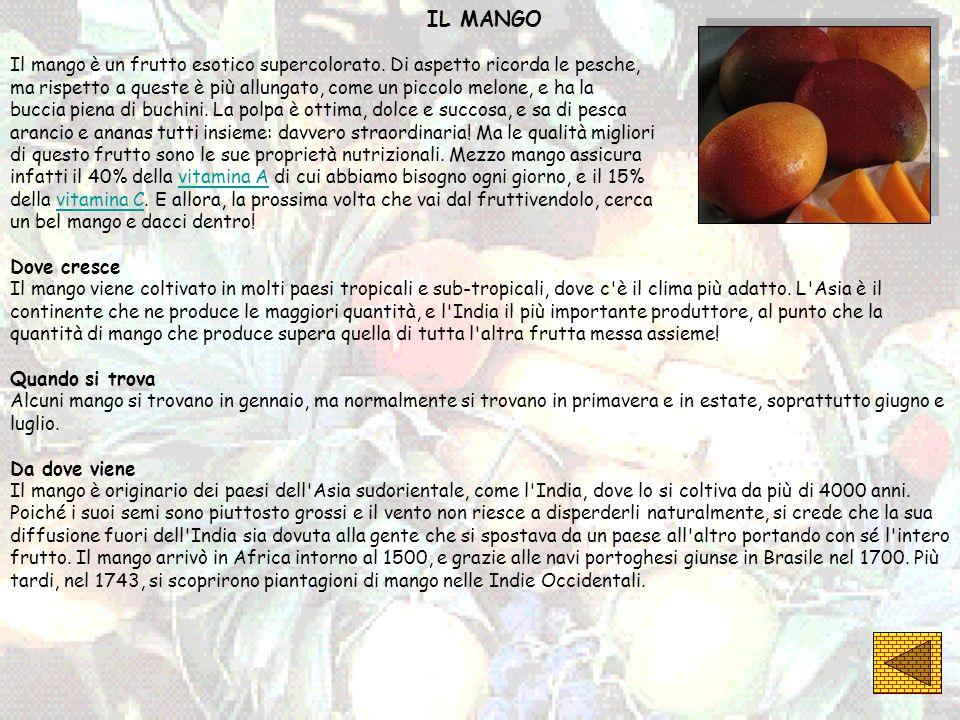 IL MANGO Il mango è un frutto esotico supercolorato. Di aspetto ricorda le pesche, ma rispetto a queste è più allungato, come un piccolo melone, e ha