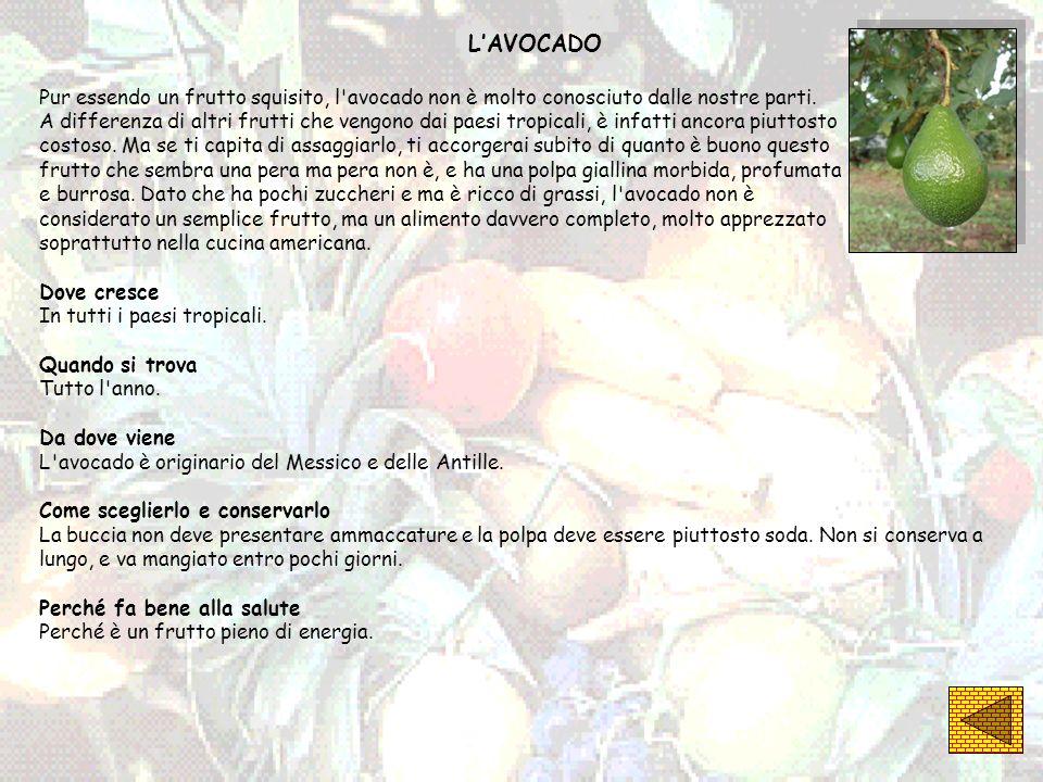 LAVOCADO Pur essendo un frutto squisito, l'avocado non è molto conosciuto dalle nostre parti. A differenza di altri frutti che vengono dai paesi tropi