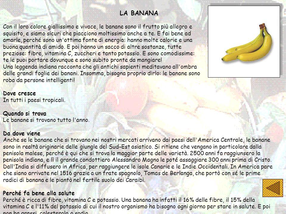 LA BANANA Con il loro colore giallissimo e vivace, le banane sono il frutto più allegro e squisito, e siamo sicuri che piacciono moltissimo anche a te