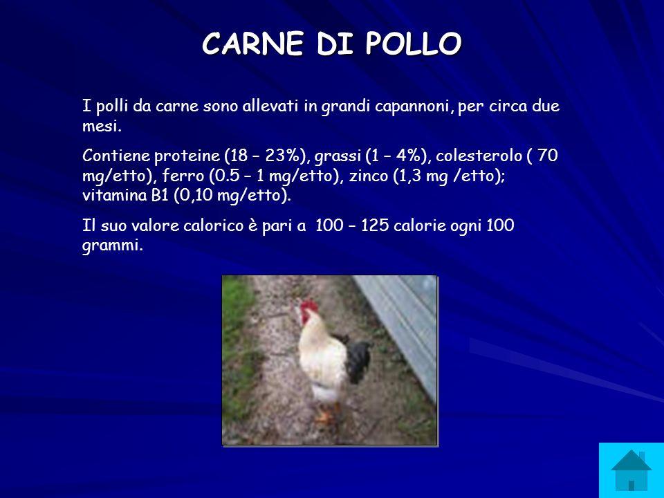 CARNE DI TACCHINO Sono animali allevati per 120-150 giorni in allevamenti industriali paragonabili a quelli dei polli.