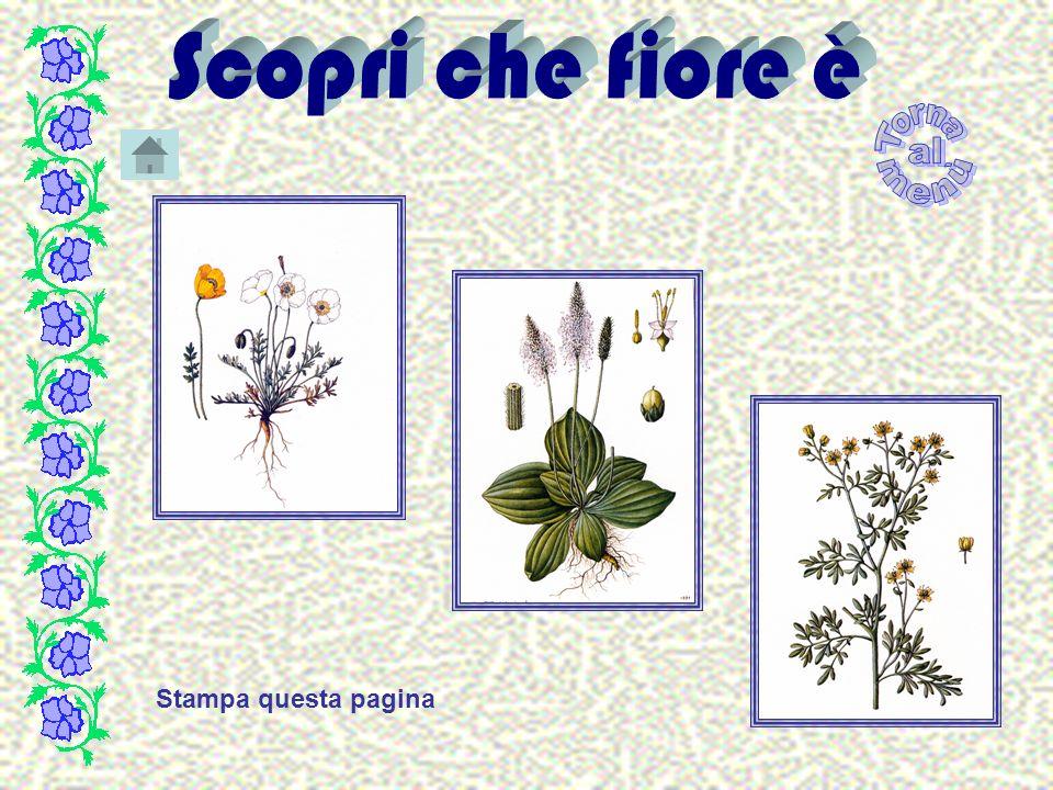 Nastriforme Lamina ristretta ed allungata, caratteristica delle piante Monocotiledoni sommerse.