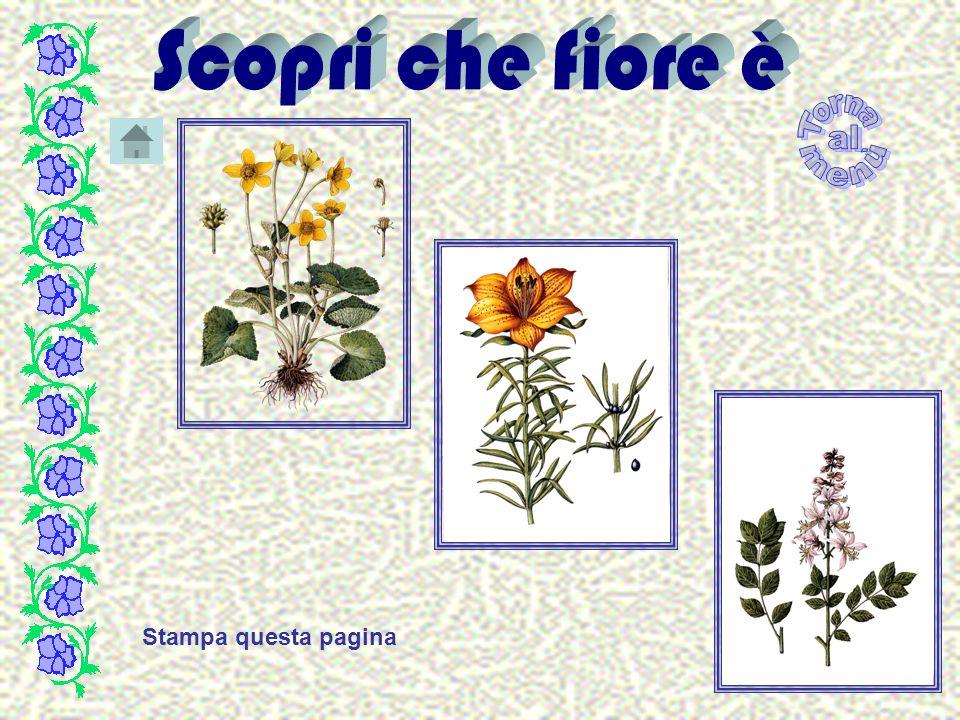 Fiore Organo effimero per mezzo del quale avviene la fecondazoine e la riproduzione della specie.