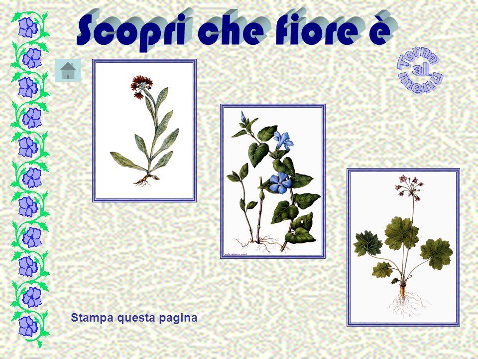 Attenzione Non esiste una pianta in questa serie che corrisponda a questo percorso RIPROVA !