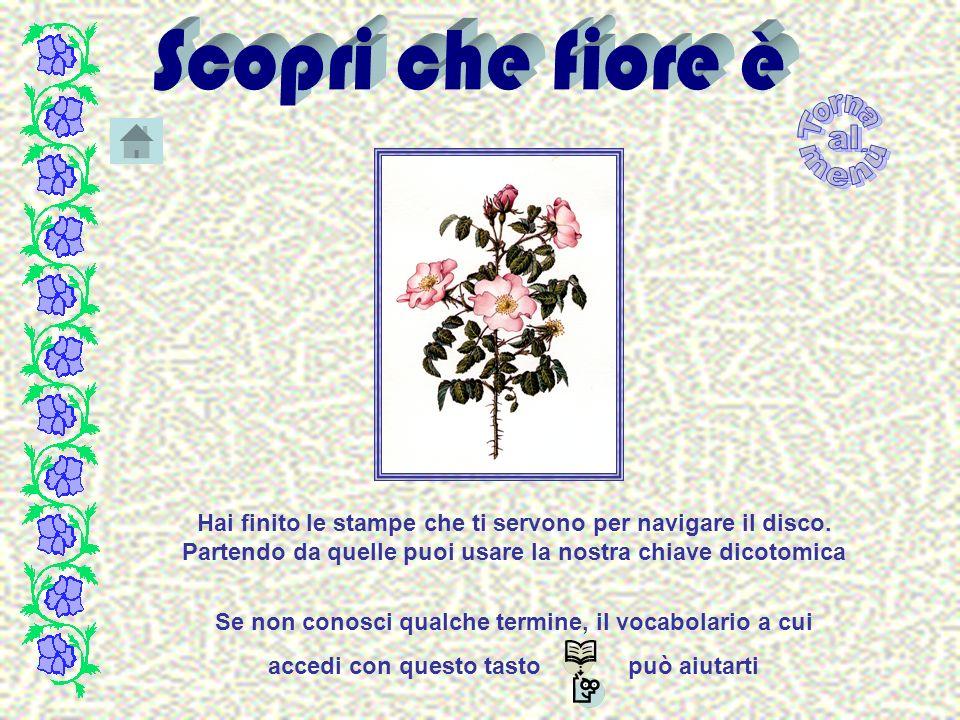 Cortusa Matthioli L.- Cortusa Fam.