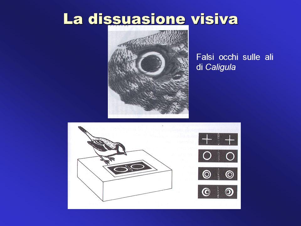 La dissuasione visiva Falsi occhi sulle ali di Caligula