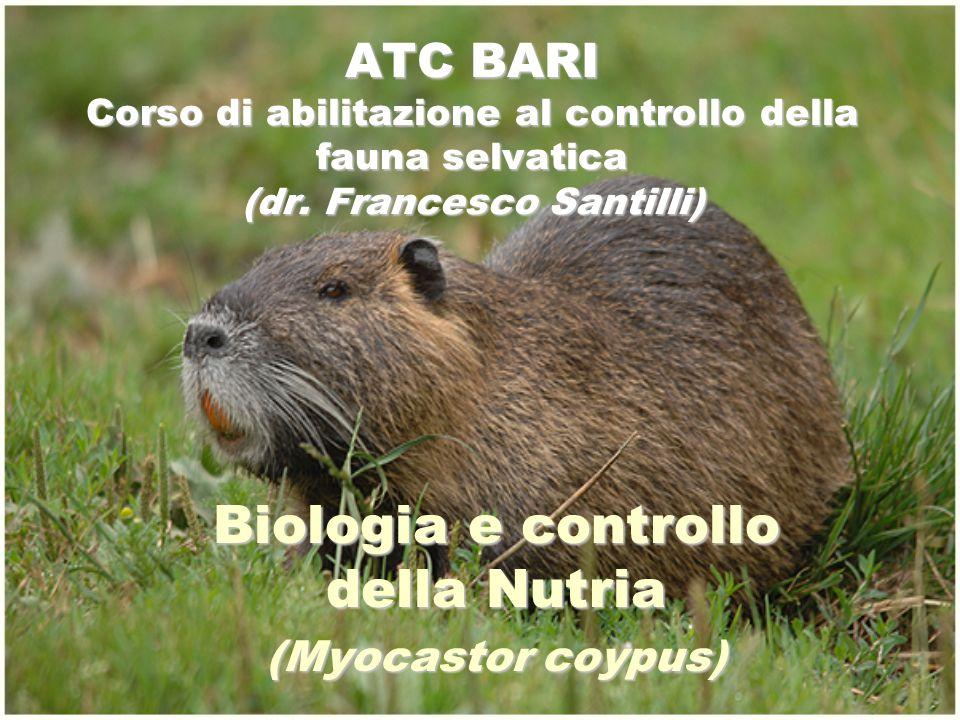 ATC BARI Corso di abilitazione al controllo della fauna selvatica (dr. Francesco Santilli) Biologia e controllo della Nutria (Myocastor coypus)