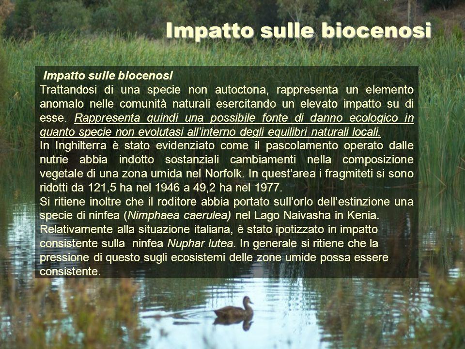 Impatto sulle biocenosi Trattandosi di una specie non autoctona, rappresenta un elemento anomalo nelle comunità naturali esercitando un elevato impatt