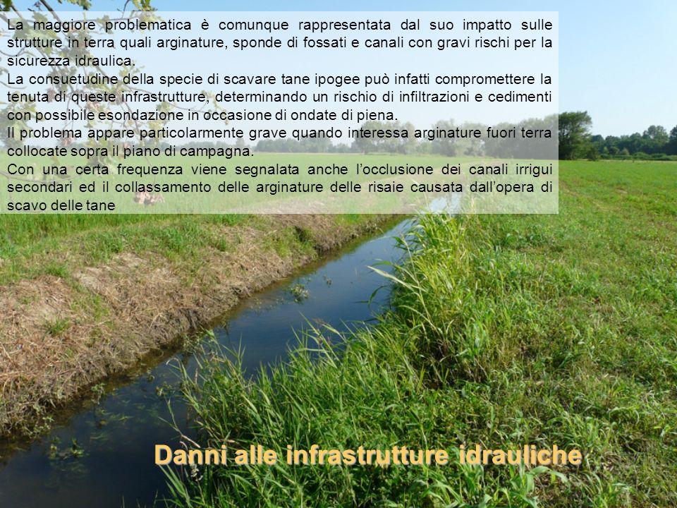 La maggiore problematica è comunque rappresentata dal suo impatto sulle strutture in terra quali arginature, sponde di fossati e canali con gravi risc