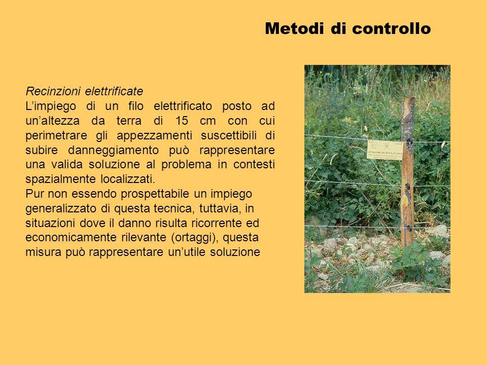 Metodi di controllo Recinzioni elettrificate Limpiego di un filo elettrificato posto ad unaltezza da terra di 15 cm con cui perimetrare gli appezzamen