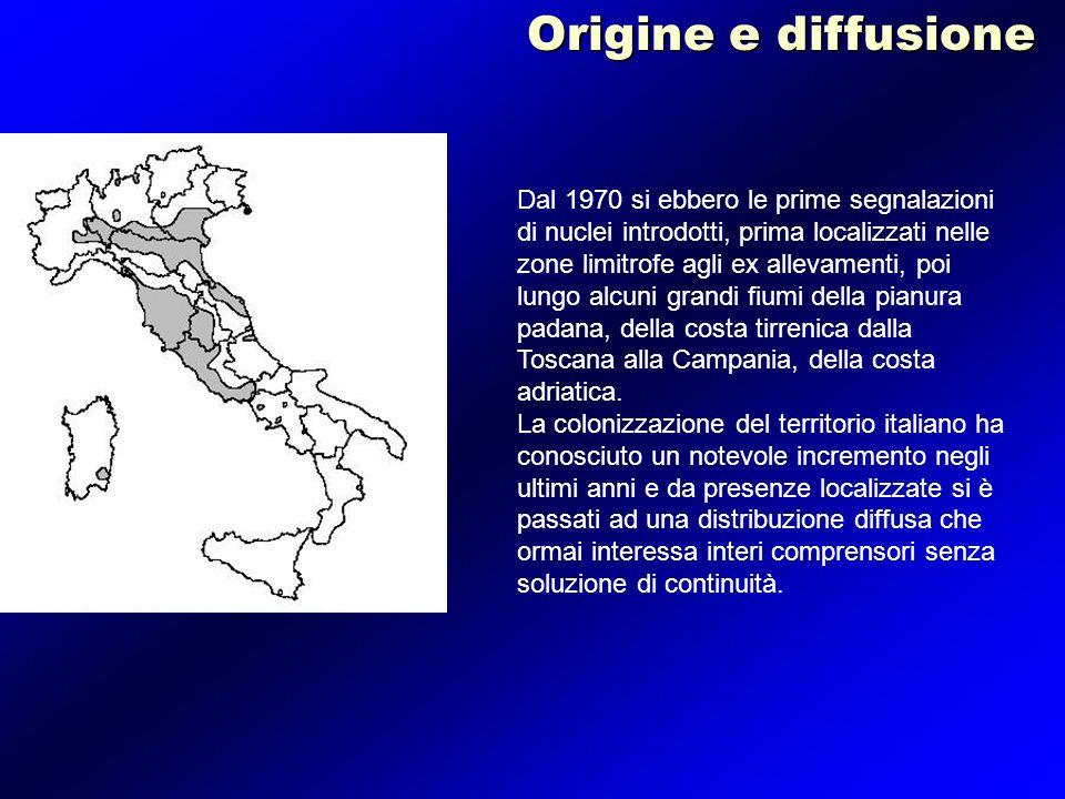 Dal 1970 si ebbero le prime segnalazioni di nuclei introdotti, prima localizzati nelle zone limitrofe agli ex allevamenti, poi lungo alcuni grandi fiu
