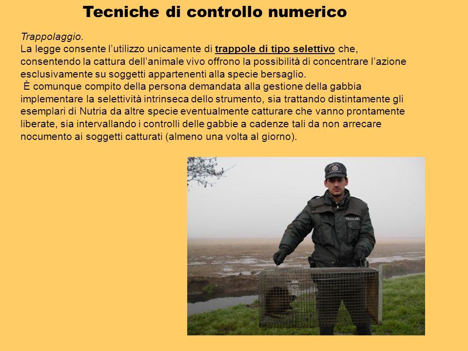 Tecniche di controllo numerico Trappolaggio. La legge consente lutilizzo unicamente di trappole di tipo selettivo che, consentendo la cattura dellanim