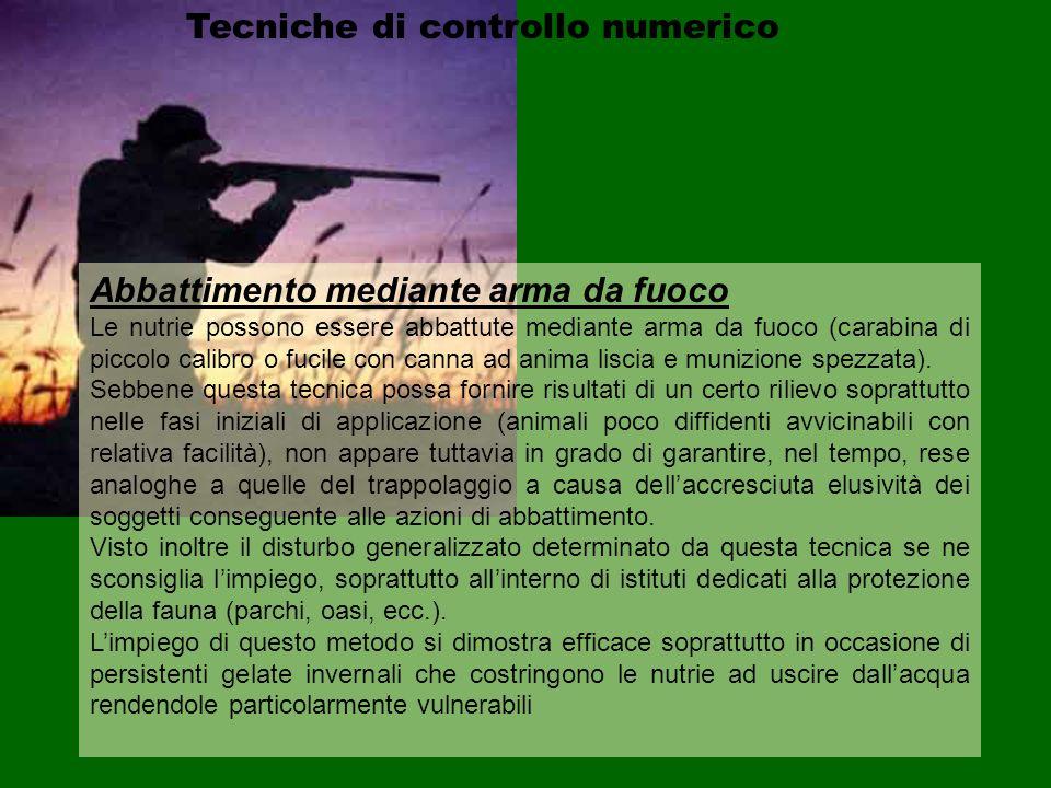 Tecniche di controllo numerico Abbattimento mediante arma da fuoco Le nutrie possono essere abbattute mediante arma da fuoco (carabina di piccolo cali