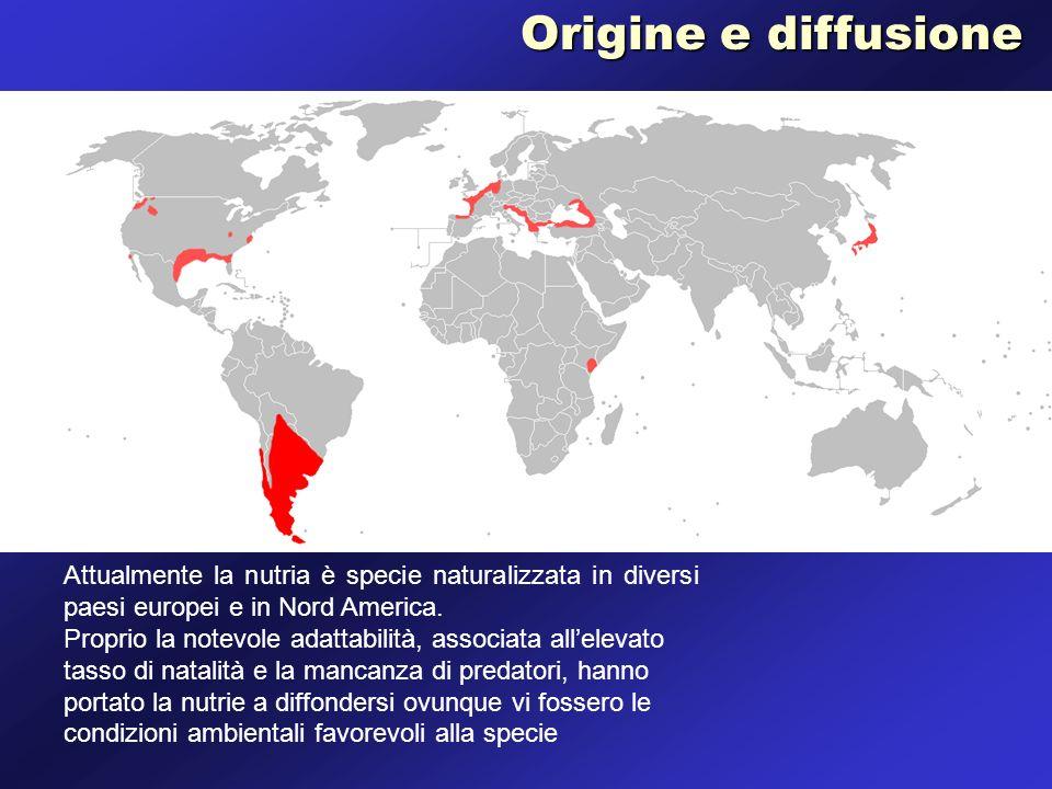 Attualmente la nutria è specie naturalizzata in diversi paesi europei e in Nord America. Proprio la notevole adattabilità, associata allelevato tasso
