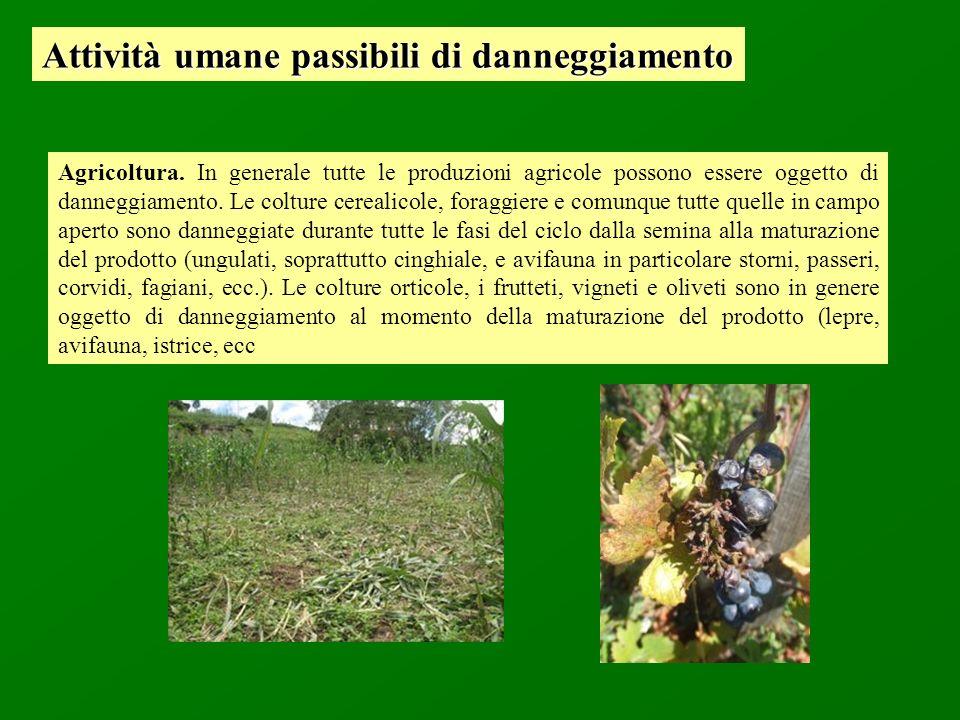 Agricoltura. In generale tutte le produzioni agricole possono essere oggetto di danneggiamento. Le colture cerealicole, foraggiere e comunque tutte qu