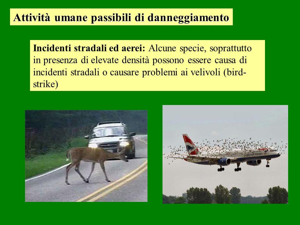 Incidenti stradali ed aerei: Alcune specie, soprattutto in presenza di elevate densità possono essere causa di incidenti stradali o causare problemi ai velivoli (bird- strike) Attività umane passibili di danneggiamento