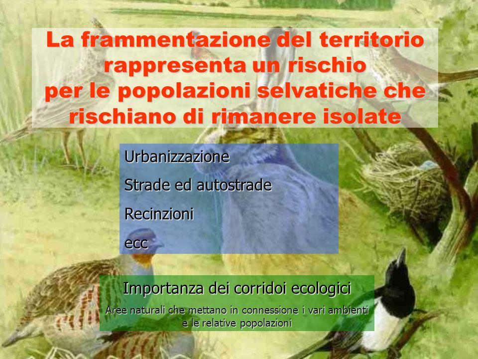 La frammentazione del territorio rappresenta un rischio per le popolazioni selvatiche che rischiano di rimanere isolate Urbanizzazione Strade ed autostrade Recinzioniecc Importanza dei corridoi ecologici Aree naturali che mettano in connessione i vari ambienti e le relative popolazioni