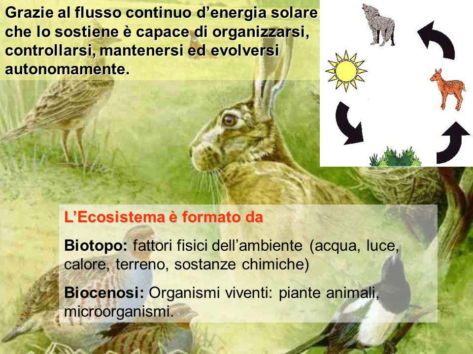 LEcosistema è formato da Biotopo: fattori fisici dellambiente (acqua, luce, calore, terreno, sostanze chimiche) Biocenosi: Organismi viventi: piante animali, microorganismi.