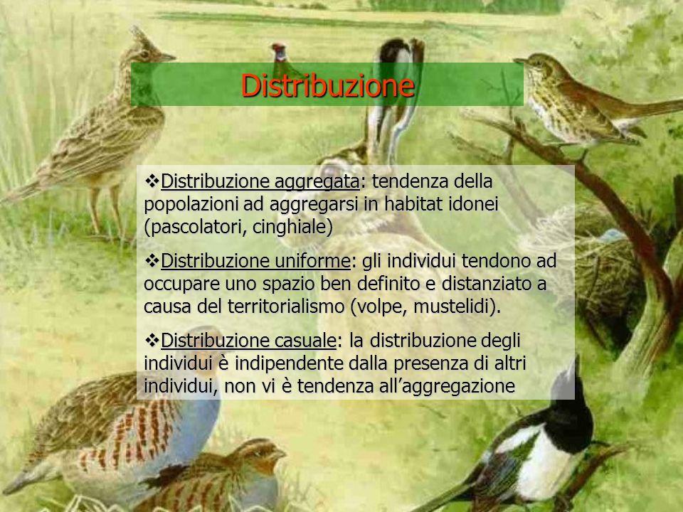 Distribuzione Distribuzione aggregata: tendenza della popolazioni ad aggregarsi in habitat idonei (pascolatori, cinghiale) Distribuzione aggregata: tendenza della popolazioni ad aggregarsi in habitat idonei (pascolatori, cinghiale) Distribuzione uniforme: gli individui tendono ad occupare uno spazio ben definito e distanziato a causa del territorialismo (volpe, mustelidi).