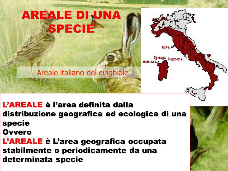 AREALE DI UNA SPECIE Areale italiano del cinghiale LAREALE è larea definita dalla distribuzione geografica ed ecologica di una specie Ovvero LAREALE è
