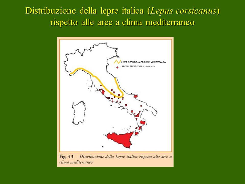 Distribuzione della lepre italica (Lepus corsicanus) rispetto alle aree a clima mediterraneo
