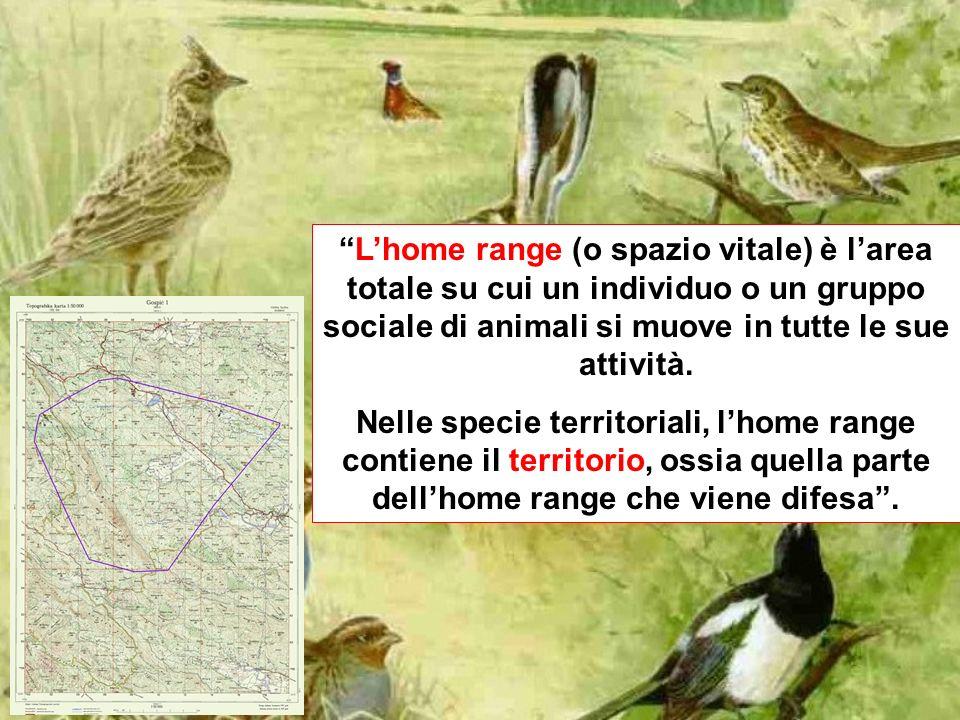 Lhome range (o spazio vitale) è larea totale su cui un individuo o un gruppo sociale di animali si muove in tutte le sue attività.