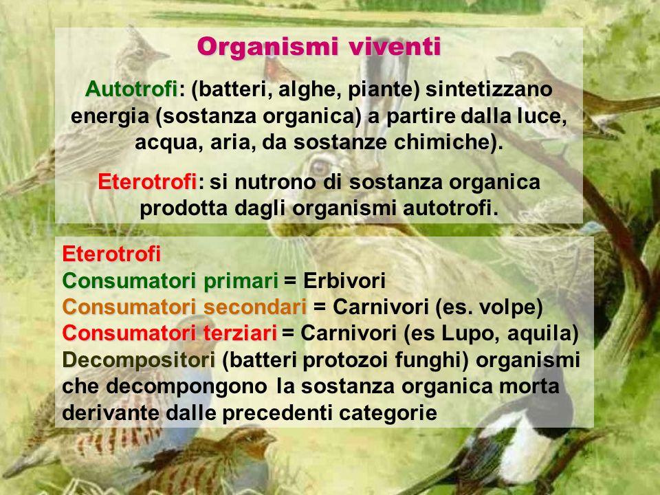 Organismi viventi Autotrofi Autotrofi: (batteri, alghe, piante) sintetizzano energia (sostanza organica) a partire dalla luce, acqua, aria, da sostanz